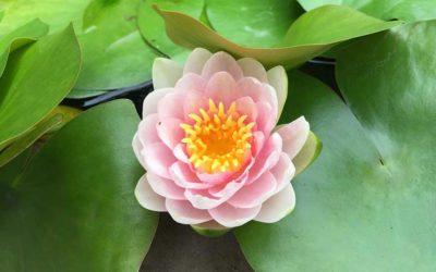 12月8日女性向け座禅会(金地院)開催のお知らせ
